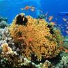 Corso Padi Discover Scuba Diving