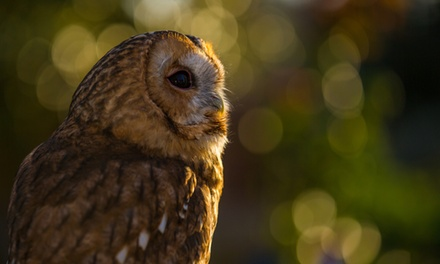 Baytree Owl & Wildlife Centre