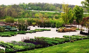 Loma Vista Nursery: Plants and Flowers at Loma Vista Nursery Garden Center (33% Off). Two Options Available.