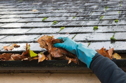 Roof and Gutter Cleaning with Moss Treatment from Ellis Property Services, LLC (51% Off)