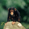 Austin Zoo – Up to 45% Off Visit