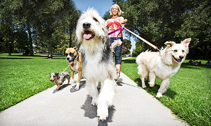 Angels Pet Pals - Harlem: Dog Walks with GPS Tracking from Angels Pet Pals (Up to 58% Off). Two Options Available.