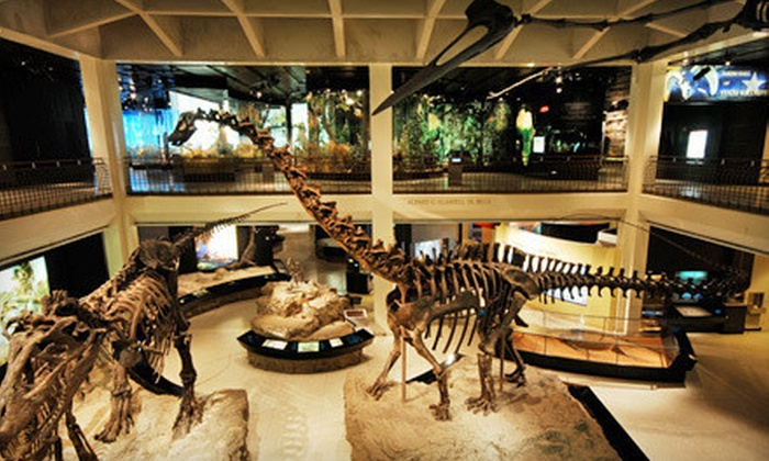 Houston Museum of Natural Science - The Museum District: Museum and Butterfly Center or Planetarium Access for Two or Four at Houston Museum of Natural Science (Up to 51% Off)