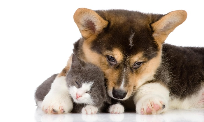 Skoopy Doo - Dallas: $15 for One Pet-Waste Removal with One Follow-Up Removal by Skoopy Doo ($80 Value)