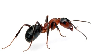 Team Pest USA Exterminating Co: $49 for Interior and Exterior Pest-Control Services from Team Pest USA ($150 Value)