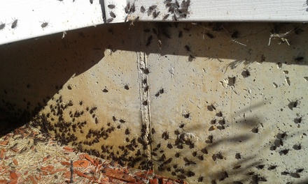 Up to 56% Off Exterior & interior Pest Control at Family Pest Control LLC