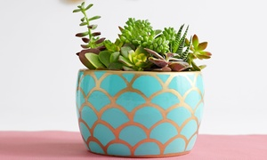 ProPlants: $15 for $30 Worth of Flowers and Potted Plants from ProPlants