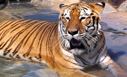 "$150 for a ""Member-For-a-Day"" ""Feed a Big Cat or Bear"" Experience for Two at Lions Tigers & Bears ($210 Value)"