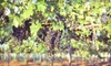 Wilhelm Family Vineyards - Patagonia: Wine Tasting with Catered Box Lunch for Two or Four at Wilhelm Family Vineyards in Elgin (Up to 57% Off)