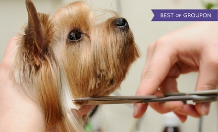 Full Grooming for a Cat or a Small, Medium, or Large Dog at Regina's Pet Parlor (Up to 50% Off)