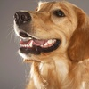 Up to 58% Off Dog Boarding and Grooming