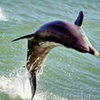 $12 for Dolphin-Watching Speedboat Trip