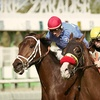 Up to Half Off Horseracing Outing at Turf Paradise