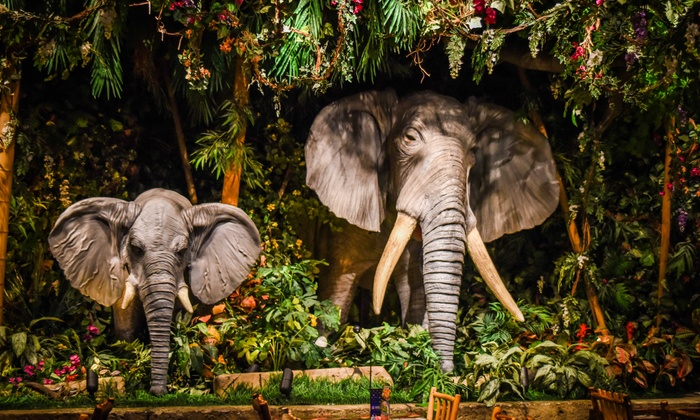 Rainforest Cafe In San Francisco Coupons