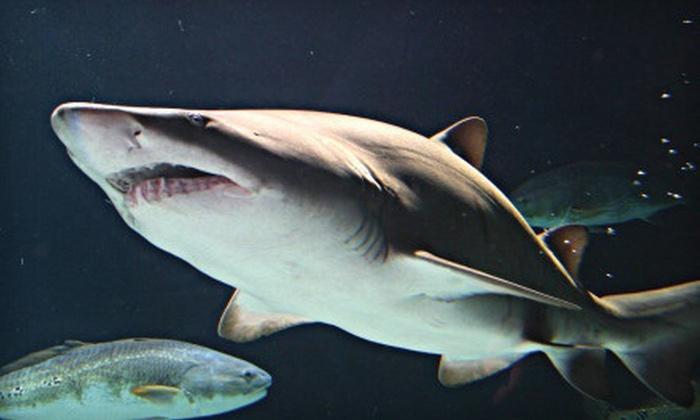Visit To Aquarium Event Sea Life Minnesota Aquarium