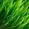 53% Off Spring Irrigation-System Inspection