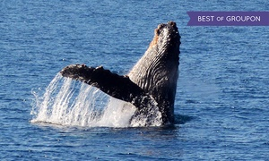 Harbor Breeze Cruises: Whale-Watching Cruise tickets for One, Two, or Four from Harbor Breeze Cruises (Up to 50% Off)