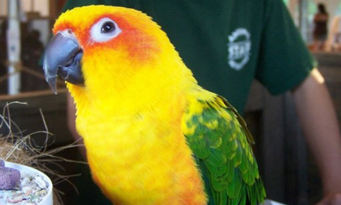 Animal Adventures - Bolton: General Admission and Wildlife Tour for Two or Four at Animal Adventures (Up to 54% Off)