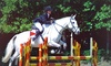 Balcultry Stables - Swords: Horse Riding: Individual or Group Lesson for €15 at Balcultry Stables (Up to 57% Off*)