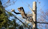 HC Group: Tree-Trimming or Removal Services from HC Group (Up to 53% Off)