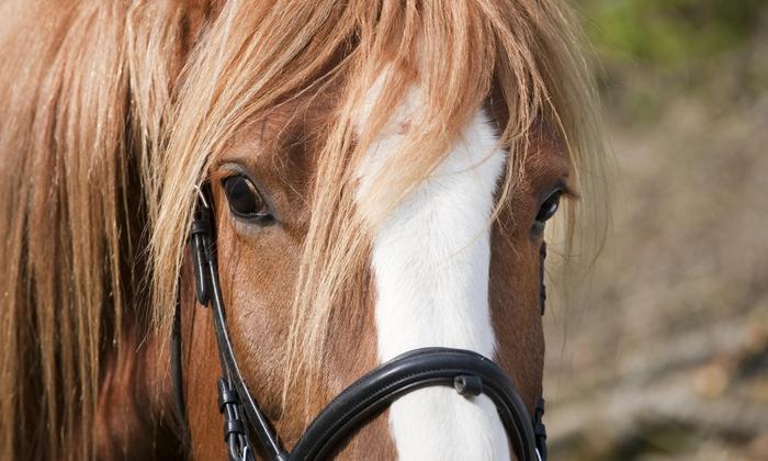 Shelby Oaks Farm - Wilsonville: $30 for $50 Worth of Horseback Riding — Shelby Oaks Farm