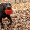 Gnawsome Squeaker Balls BPA-Free Dog Toys