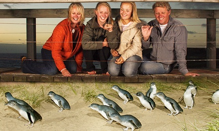 Phillip Island: Seal and Penguin-Filled Day Tour for an Adult or Child at Phillip Island with Melbourne's Best Day Tours