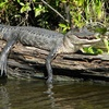 Up to 34% Off from Jean Lafitte Swamp Tours