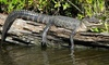 Up to 50% Swamp Tours from Jean Lafitte Swamp Tours