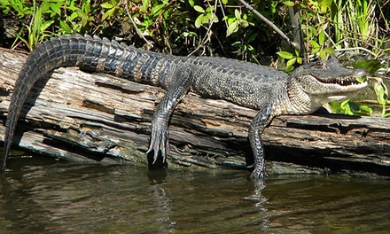 90-Minute Boat Tour of Jean Lafitte National Park for One or Two from Jean Lafitte Swamp Tours (Up to 46% Off)