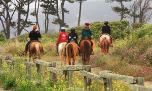 Sea Horse Ranch: $49 for a 90-Minute Trail and Beach Horseback Ride at Sea Horse Ranch ($80 Value)