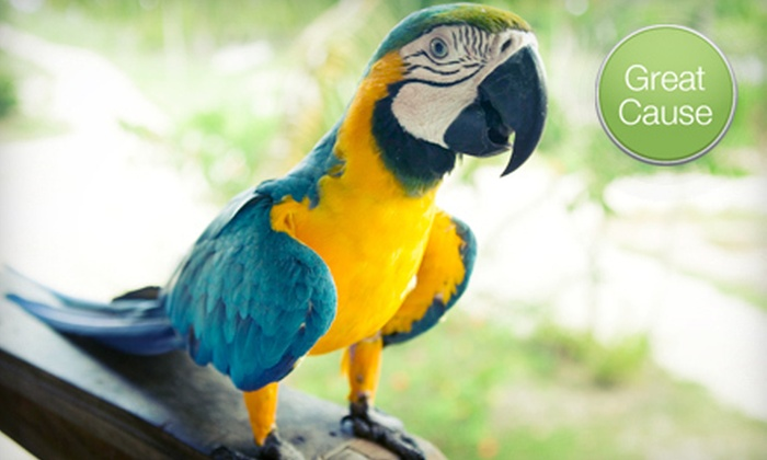The Priceless Parrot Preserve - New York City: $10 Donation to Help Feed Rescued Parrots