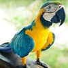 $10 Donation to The Priceless Parrot Preserve