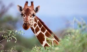 Monde Sauvage: Une entrée pour 1 personne au zoo-safari Le Monde Sauvage d'Aywaille à 11 €
