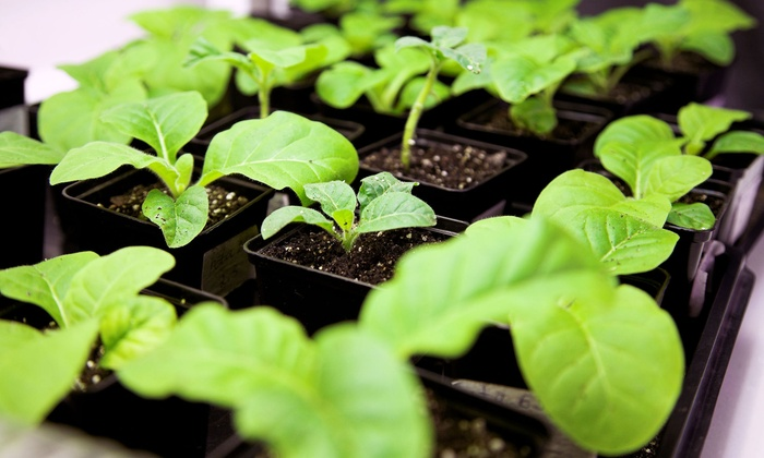 North County Hydroponics - Townsite: $41 for $75 Groupon — North County Hydroponics