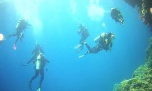 Tante Bolle... poche Balle!: Corsi sub con 2 immersioni in mare per 1 o 2 persone da Tante Bolle, Poche Balle