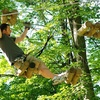 Up to Half Off Zipline and Tree Climbing Tour