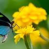 Entrées pour le monde des papillons