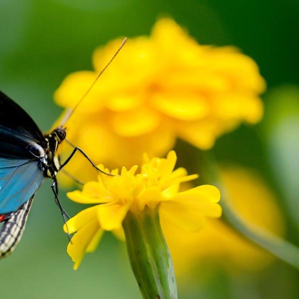 Entry For 1 Or 2 To Dubai Butterfly Gardens Dubai Butterfly Garden Groupon