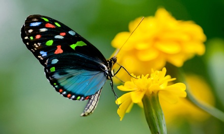 Butterfly-Sanctuary Visit for 2 or 4 or Birthday Party for Up to 10 at The Butterfly Charities (Up to 55%Off)