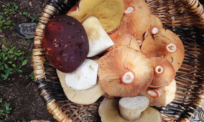 Telluride Mushroom Festival - Telluride: Four-Day Entry for One or Two to Telluride Mushroom Festival (57% Off)