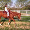 Up to 51% Off Equestrian Lesson or Tack in Springfield