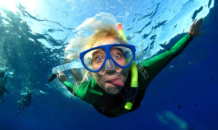 Snorkel Package for One or Two or Spearfishing Package for One from La Jolla Water Sports (Up to 61% Off)