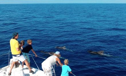 Paseo en barco con avistamiento de cetáceos y comida con bebida para 2 o 4 personas desde 39,90 € en Tonina Cruises