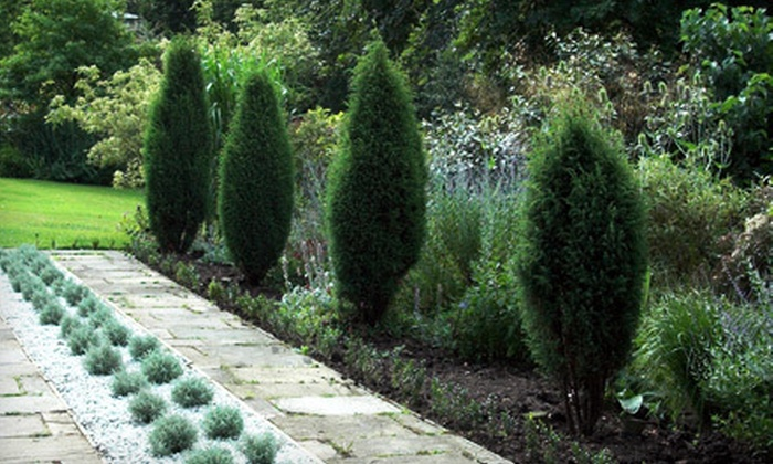 LaSalle Landscape Supply - Windsor: $69 for $150 Toward Any Tree or One Dawn Redwood or Pyramidal English Oak at LaSalle Landscape Supply (Up to 54% Off)
