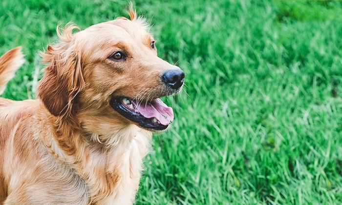Cobrador Kennels - Agassiz: 5 or 10 Days of Doggie Daycare or Three Nights of Dog Boarding at Cobrador Kennels (Up to 54% Off)