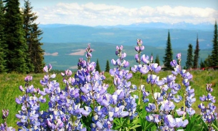 Outdoor Discoveries - Silver Star Mountain: Mountain Wildflower Tour or Bears and Berries Tour for Two or Four from Outdoor Discoveries in Vernon (Up to 55% Off)