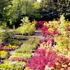Up to 56% Off Trees and Plants at Greer Gardens