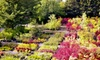 Greer Gardens - Cal Young: Flowering Trees, Plants, and Flowers at Greer Gardens (Up to 56% Off). Four Options Available.