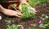 The Composting Network - New Orleans: $35 for $60 Worth of Lawn and Garden Care — The Composting Network